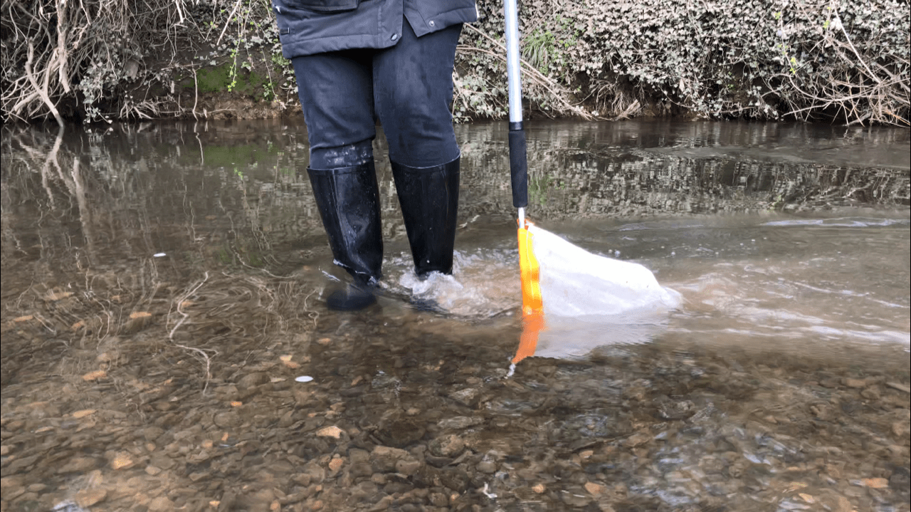 Kick sampling for Aquatic Invertebrates